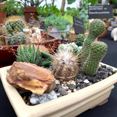 The Odd Plant Show & Sale September 2019